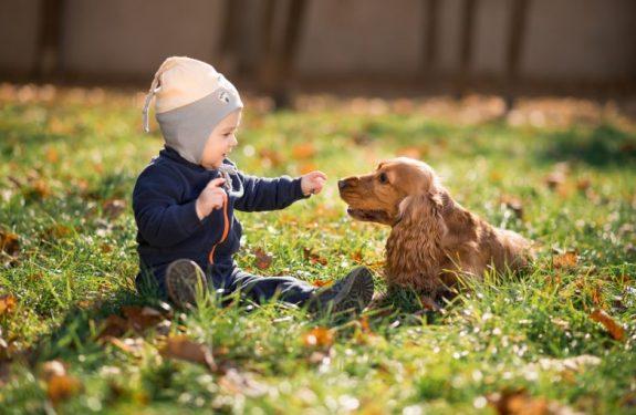 ¿Qué hago si un perro ha mordido a mi hijo?