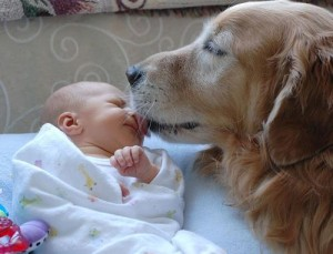 Evita el contacto perro-bebé