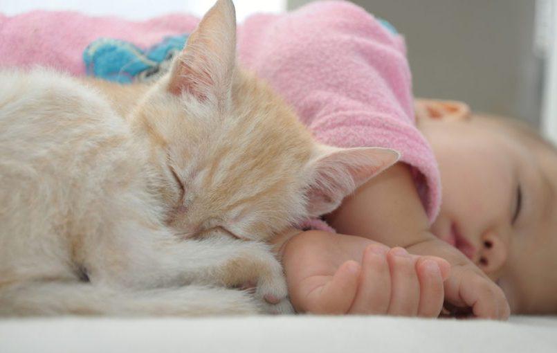 Síntomas de alergia al gato en bebés
